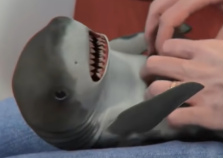 Only if Jaws Had Been Treated This Way as a Baby