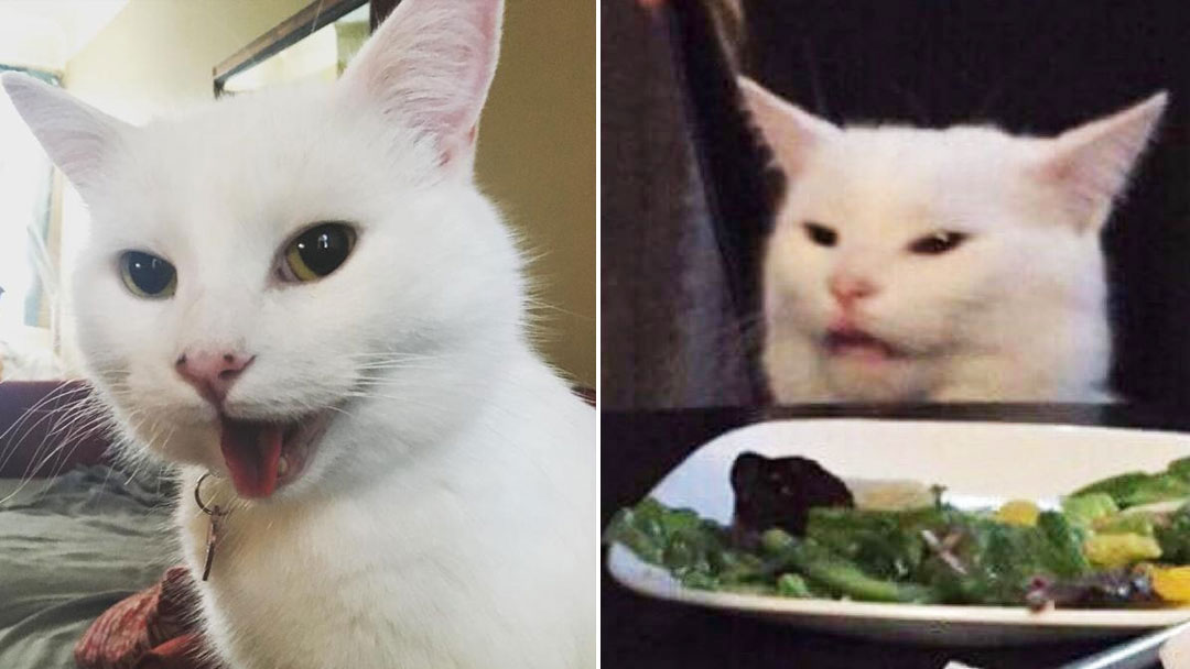 The Cat Behind the Meme