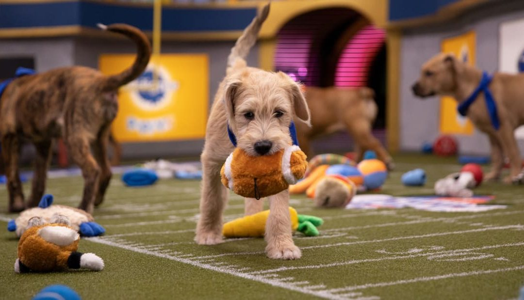 Puppy Bowl Preview